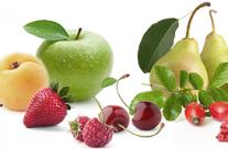 Früchte für unser Edelbrände