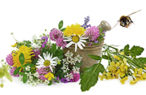 Erlesene Blüten für unseren Honig
